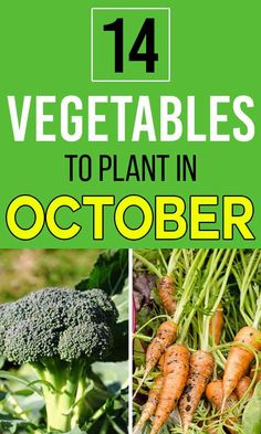 October is probably the best time to grow vegetables. If you are wondering what vegetables might grow well in India, then here we have some easy ones for you.#vegetables #plants #gardening #october Vegetable Garden For Beginners, Gardening For Beginners, Growing Vegetables, Green Beans, Are You The One, Harvest, October, India, Plants