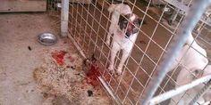 Stop Killing Romanian Straydogs