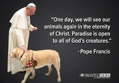 Nightly News with Lester Holt on Do all dogs go to heaven? Pope Francis says yes. reports tonightDo all dogs go to heaven? Pope Francis says yes. All Dogs, I Love Dogs, Puppy Love, Papa Francisco Frases, Amor Animal, Cesar Millan, All Gods Creatures, Rainbow Bridge, Animal Quotes