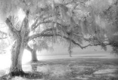 """Rainy Day on the Lakefront"", Photo by Harriet Blum.  This picture was taken on the lakefront in Mandeville, LA.  I used black and white infrared film for the dreamy look."