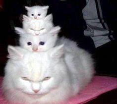 white cats                                                                                                                                                     More