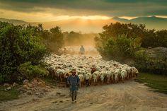 Sheep Art, Counting Sheep, Goat Farming, Mundo Animal, Farm Yard, Landscape Photos, Flocking, Farm Life, Belle Photo