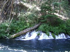 Another pic of the springs on the Metolius River Oregon