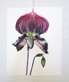 Orchid ORIGINAL Painting flower watercolor by AnnaToozeFineArt