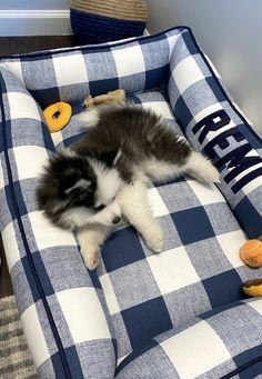 Farmhouse Dog Beds, Pocket Beagle, Bolster Dog Bed, Puppy Beds, Pet Beds, Boxer Mix, Modern Farmhouse Decor, Farmhouse Style, Pet Names