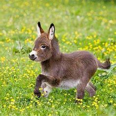 Awe!!! Donkey!!
