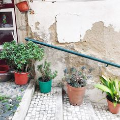 When you wander the streets of the old town in Lisbon you find the most precious corners - often full of gorgeous plants  Still trying to recover from the fantastic days back home - sleep and energy are still not back to normal...any tips? . . #lisboa #lisbon #portugal #latergram #mouraria #visitportugal #portugalcomefeitos #portugaldenorteasul #igersportugal #calçadaportuguesa #cactus #instatravel #suitcasetravels #theprettycities #postcardplaces #passionpassport #abmtravelbug #tandctravel…