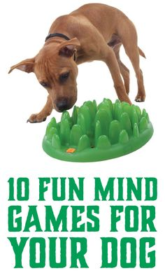 10 Fun Mind Games For Your Dog!