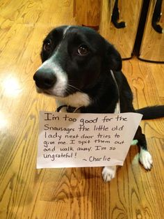 Dogs with Notes: The best of Dog Shaming Funny Pictures) I laughed so hard I couldn't breathe! I'm so thankful I don't have a dog. Funny Dog Memes, Funny Animal Memes, Cute Funny Animals, Funny Animal Pictures, Funny Cute, Funny Dogs, Dog Jokes, Hilarious, I Love Dogs