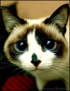 """""""Cats look beyond appearances--beyond species entirely, it seems--to peer into the heart."""" --Barbara L Diamond"""