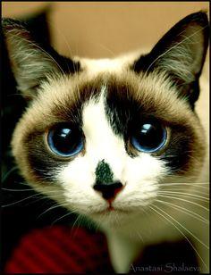 Big blue eyes.