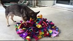 "A fellow dog trainer and friend, Amanda Cornell CPDT-KA, who owns Accomplished Canines Dog Training, shared with me this great DIY for a fun way to give your dog his food or treats in something called a ""Snuffle Mat."" It's basically …"