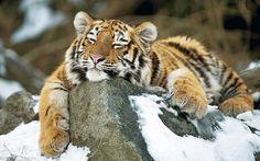 Winter in Vienna :-) Der Winter verzaubert die Schönbrunner Zootiere - Tiergärten - derStandard.at › Panorama. josef gelernter