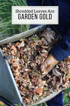 For gardeners, shredded leaves are a free and valuable resource! They improve the soil and are a premium organic mulch for flowers and vegetables. Organic Mulch, Organic Gardening, Gardening Tips, Hydroponic Gardening, Hydroponics, Veg Garden, Vegetable Gardening, Garden Soil, Indoor Garden