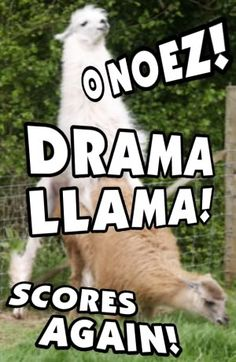 llamas spit when they are angry.