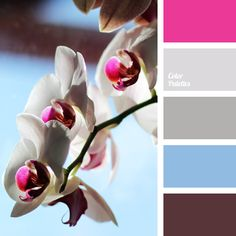 Delicate shades of silver gently complement combination of bright fuchsia color with purple-brown and blue color. This color scheme can be used for exterior trim of cottage or vacation house: bright facade elements, shutters or railing will look harmonious being framed with calmer colors.
