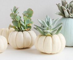 I saw these mini pumpkins on sale at the store the other day and brought a handful home to make a little succulent garden for fall. Want to make your own mini pumpkin planters? They're super easy to make and only cost a few dollars. Let's do this...