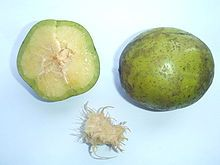 Spondias dulcis (syn. Spondias cytherea), known commonly as ambarella and hog plum, is an equatorial or tropical tree, with edible fruit containing a fibrous pit.