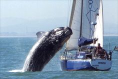 whale attacks sailboat outside. SA i was in a boat when this happened surrounded by sharks