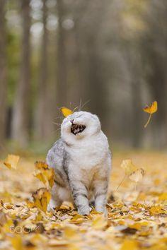 Via Zhao Hui Oh, I am so happy!