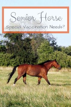 Do senior horses have special vaccination needs? Dr. Hankins explains why senior horses are in a category of their own for vaccinations and care.