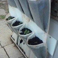 Vertical plant and herb gardens. Only use muslim or mesh or some other non toxic material. Reinforce the pockets on the mesh ones so they don't come unstiched. Back Gardens, Small Gardens, How To Cure Diarrhea, Trough Planters, Door Shoe Organizer, Mango Fruit, Garlic Bulb, Different Vegetables, Flower Show