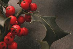 .I really love Holly. .. makes me think of Christmas and how cold winter is going to be.....