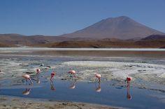 Bolivia, Laguna Hedionda