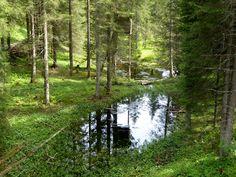 Grüne Oase - Stille und ungebändigte Natur