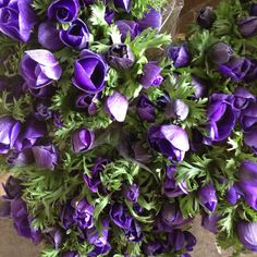 Anemone 'Marianne Blue' Blue/Purple shade. Sold in bunches of 10 stems from the Flowermonger the wholesale floral home delivery service.