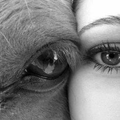Cheek to cheek and eye to eye with horse.