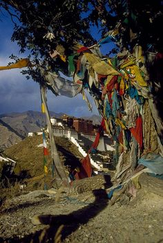 Prayer flags hanging from a tree outside Potala Palace, Lhasa, Tibet. Built in the 17th century, this renowned palace complex features hundreds of rooms and shrines. (V)