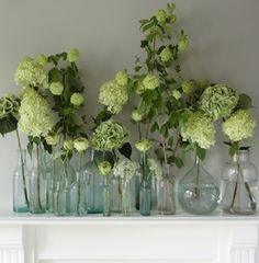 Small floral arrangements and single stems make a beautiful statement in bud vases. Bud vases are simple, elegant and incredibly versatile. - check out these 10 ways to use bud vases today! Green Hydrangea, Green Flowers, White Flowers, Beautiful Flowers, Green And White Wedding Flowers, Purple Hydrangeas, Flowers Uk, Flower Colors, Simple Flowers