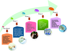 What are the different phases of clinical research?