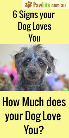 Signs your dog loves you, how much your dog love you?… #love #puppylove #signsyourdoglovesyou #doglove