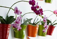 Cuidados de verano para plantas de interior