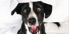 @Cute Emergency: OMG #Puppy #Dog #Cute #Animal