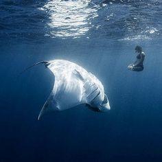 15 photos d'animaux de mer terrifiants qui vous feront aimer la montagne !
