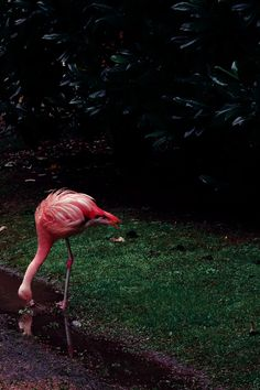 Flamingo - Jpeople Magazine   Baubauhaus.