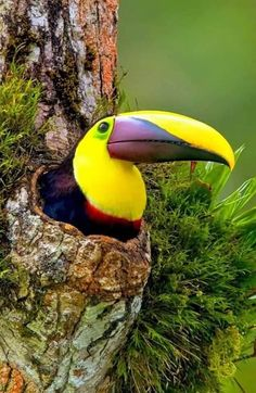 Terrific Free of Charge Pet Birds parrots Suggestions If you share your lifetime — and home — with a dog bird, containing mess and keeping the cage cl Tropical Birds, Exotic Birds, Colorful Birds, Polo Sul, Polo Norte, Pretty Birds, Beautiful Birds, Animals Beautiful, Animals And Pets