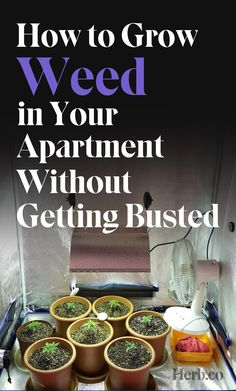 Grow Weed In Your Apartment Without Getting Busted Cannabis Growing, Cannabis Oil, Growing Marijuana Indoor, Growing Weed Indoors, Marijuana Facts, Medical Marijuana, Weed Plants, Smoking Weed, Hydroponics