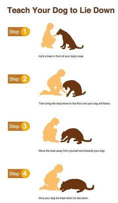 dog training - puppy training #dogtraining #puppytraining #dogtrainer #puppytrainer #dogs
