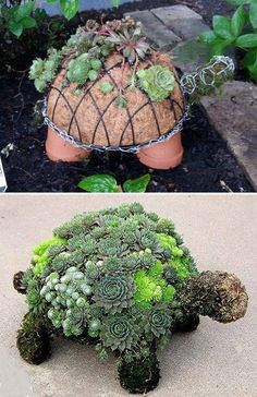This succulent turtle is amazing
