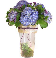 hortensia azul www.eaquilea.com