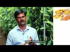 Technological advances in the agricultural sector are set to revolutionize how crops are produced and harvested. Agricultural Sector, Vertical Farming, Turmeric, Agriculture, First Time, Asia, Tech, Gardening, Youtube