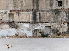 Σκύλος και τοίχος