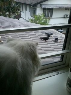 @hrhizreen > this is my cat, fluffy. she's watching birds on the rooftop #original #Keds1916