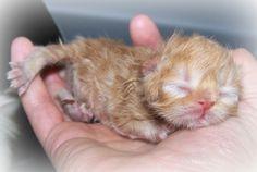 Как выкормить котенка без кошки: Секреты молочного рациона для малышей Смотри больше http://kot-pes.com/kak-vykormit-kotenka-bez-koshki/