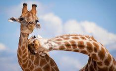Premiação londrina destaca fotos divertidas do reino animal | Catraca Livre