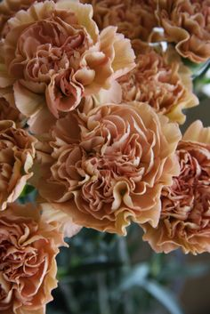 carnation love this color...